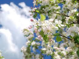 Как дожить до весны