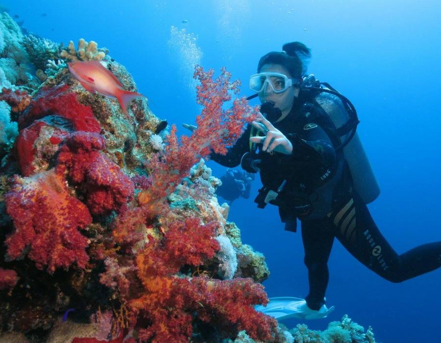 Дайвинг в Красном море Шарм-эль-Шейха в Египте