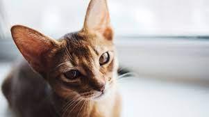 Необычное поведение кошек: экстрасенсорные способности