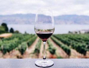 Основные преимущества красного вина для здоровья